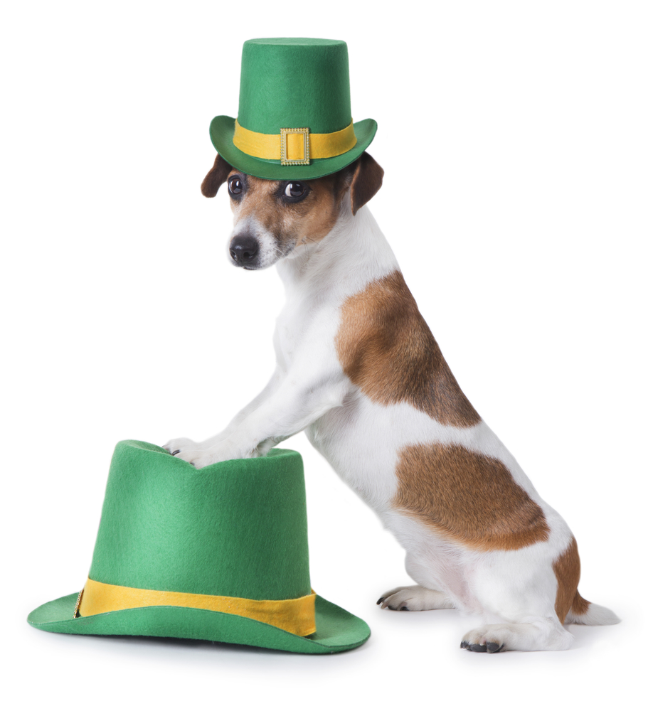 St. Patrick's Spotted Dog